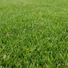 Koberec trávníkový GREENDEK TR K 20 400×2500 mm